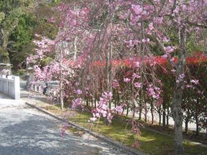 住吉神社5